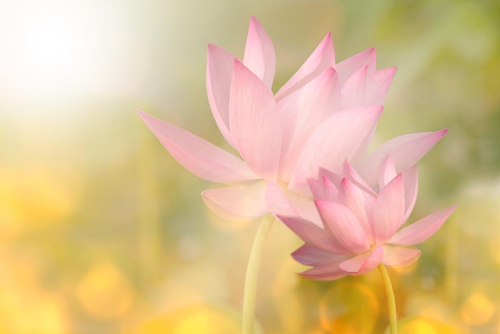 reality-yoga лотос объединение единство реальность йоги
