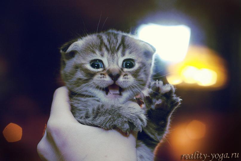 мой котенок Ахамкара йога