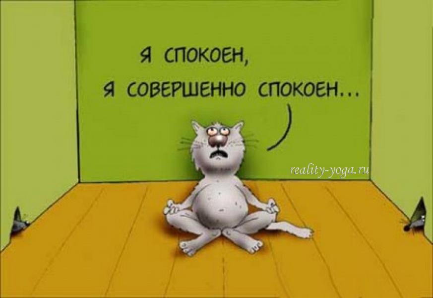 кот, медитация, спокойствие, я спокоен