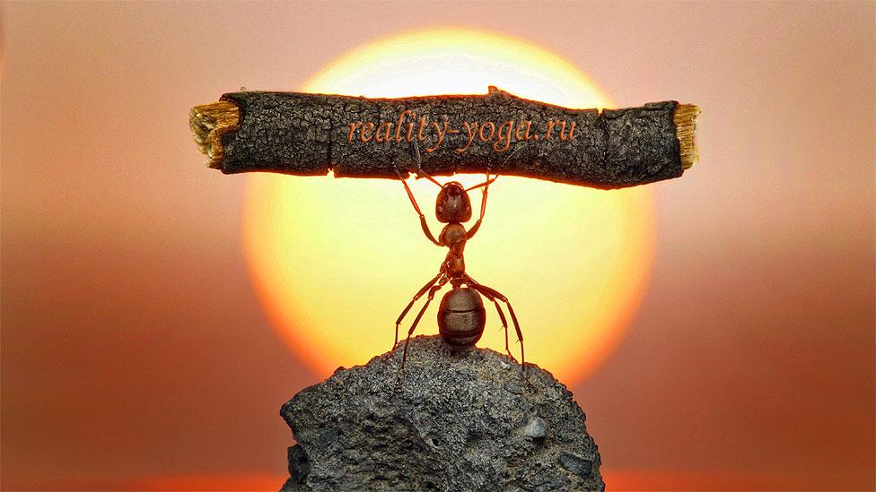 муровей сила