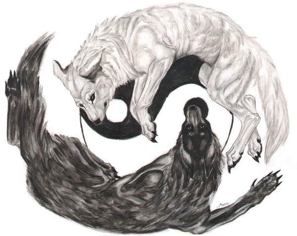 волки брются инь янь