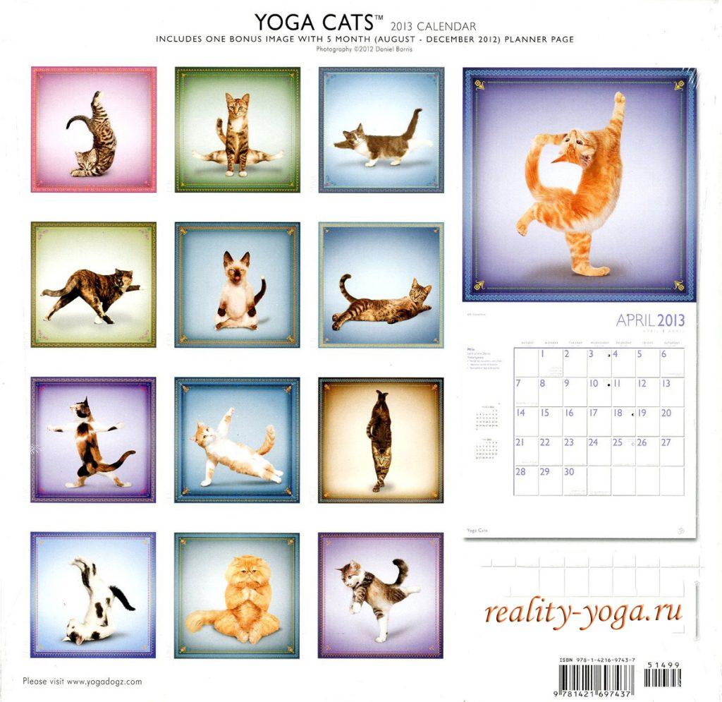 асаны йоги, йога кошек